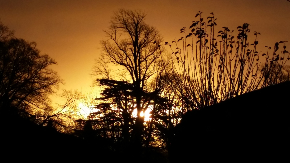 This was the beautiful sunrise at Maude and Fox yesterday morning. We were up with the sparrows sending out the last orders for Christmas!